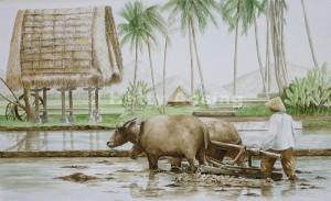 Ploughing buffalos