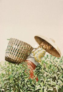 The tea picker